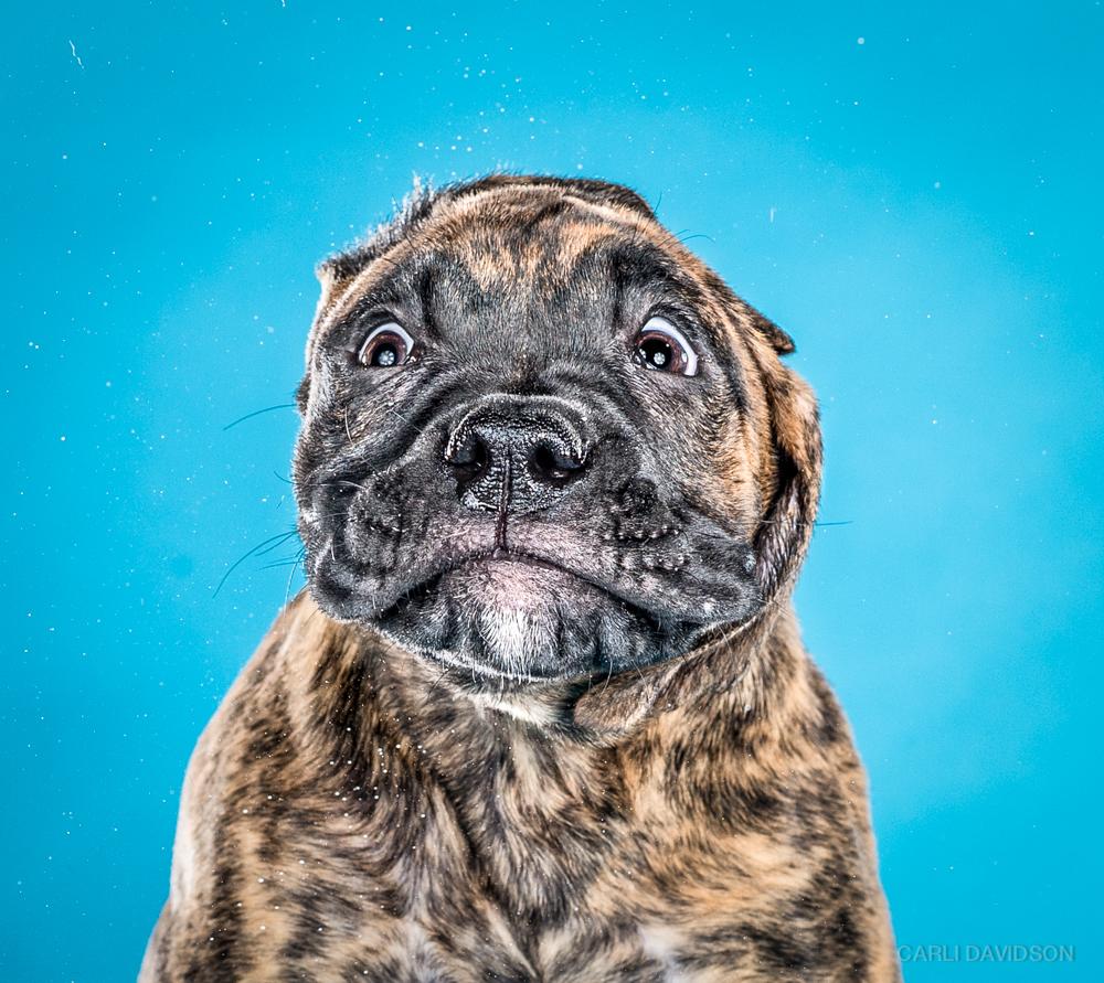 Carli Davidson Pet Photography