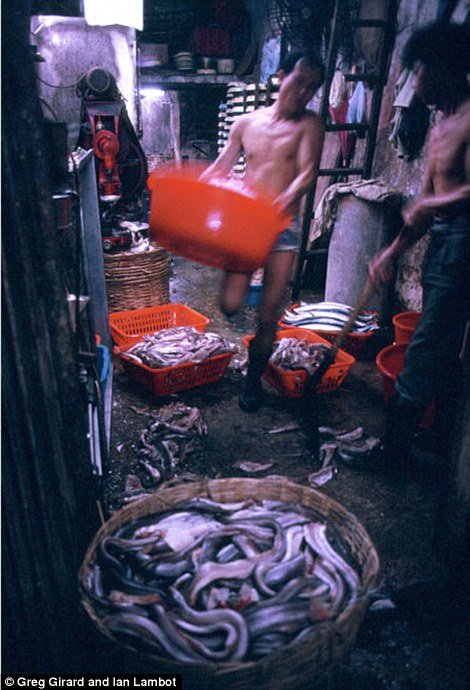 Kowloon Walled City 19
