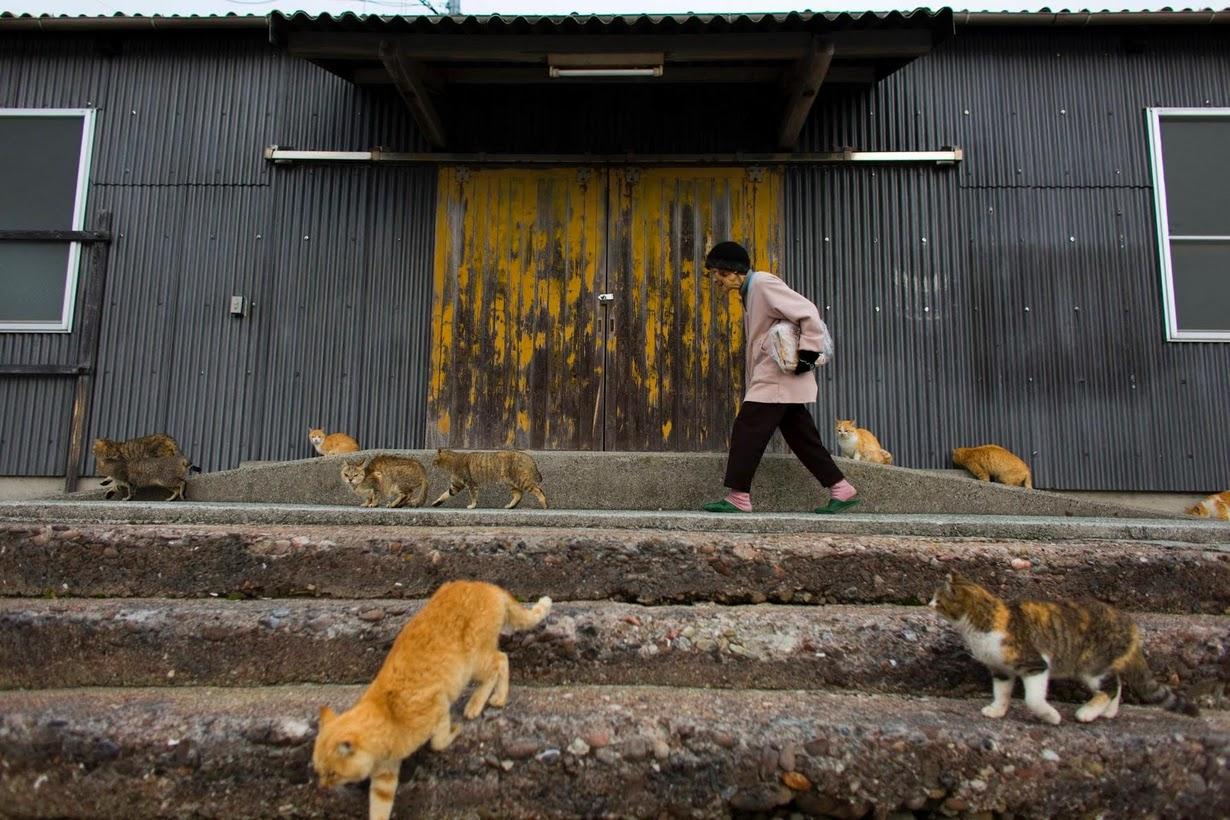 raining cats 2