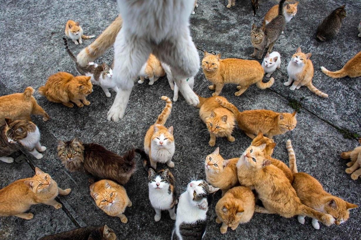 raining cats 5