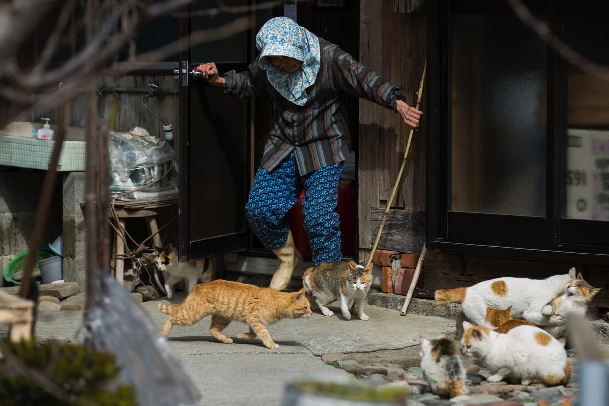 raining cats 6