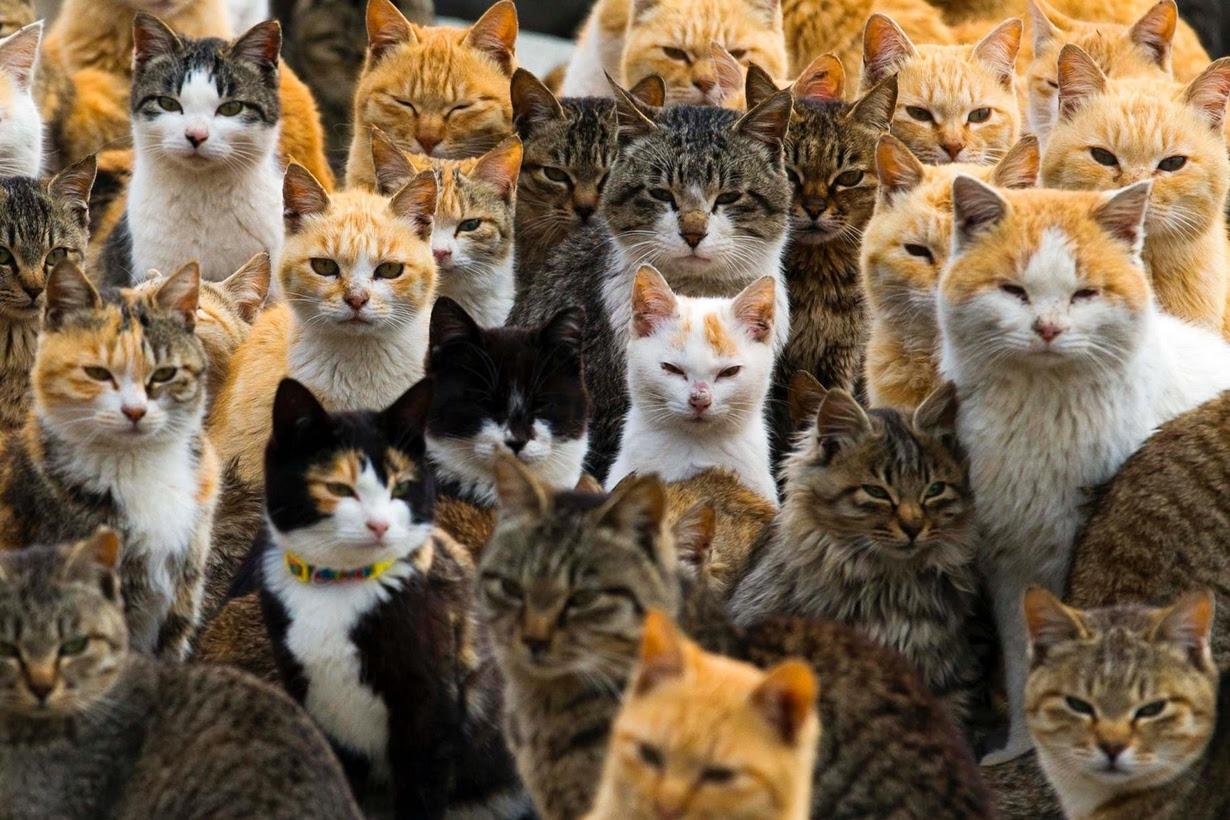 raining cats island