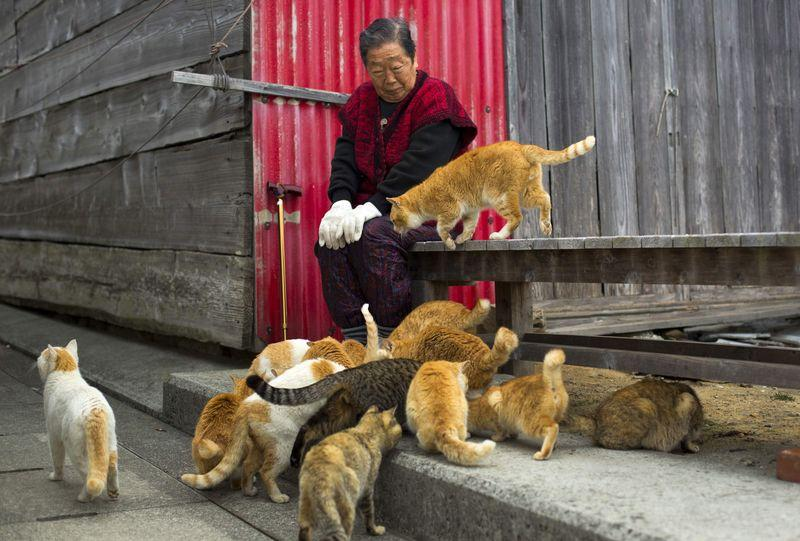 Cats surround a local woman on Aoshima Island in Ehime prefecture in southern Japan February 25, 2015. REUTERS/Thomas Peter